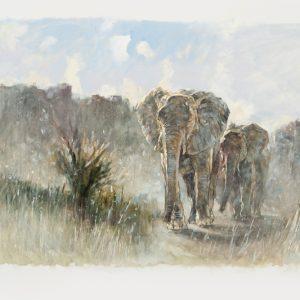 ElephantsComingDown5_IMG_4080
