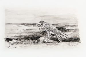 Peregrine Falcon drawing by Pieter Zaadstra